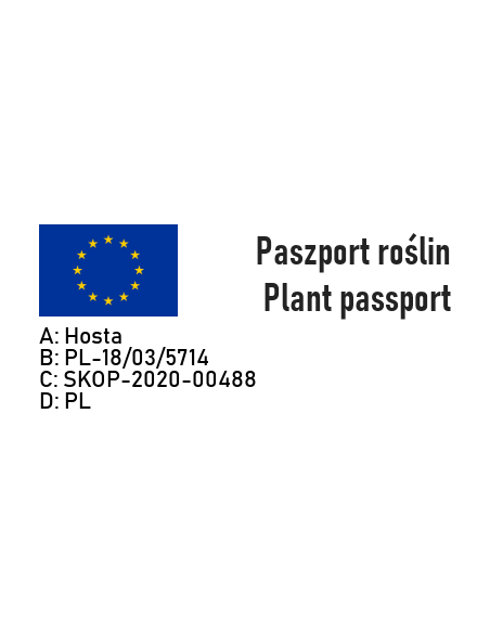 FUNKIA HOSTA WHITE FEATHER - 7