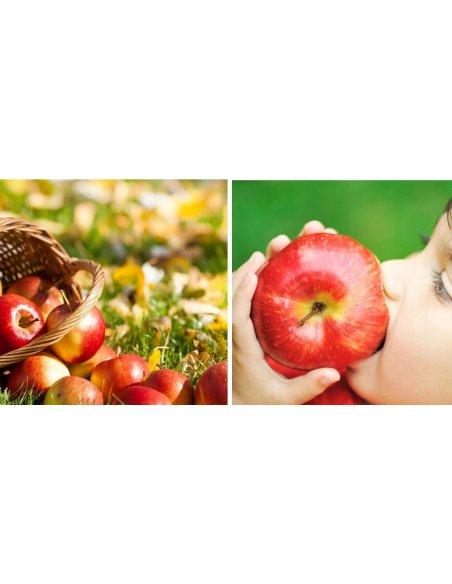Jabłoń GENEVA EARLY czerwona papierówka - 4
