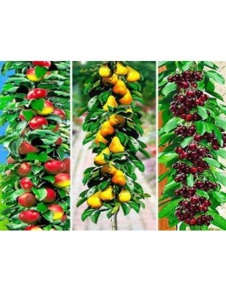 Drzewka owocowe KOLUMNOWE